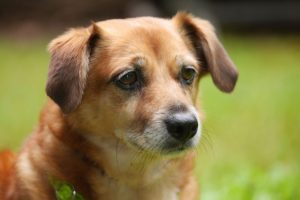 Ergotherapie Praxis Darmstadt Therapiehund Oscar